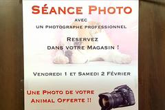 Photo de votre animal offerte par Médor et Cie Perpignan