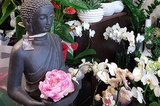 Orchidées Perpignan chez Rev'en Fleurs Cabestany avec une belle sélection et des conseils d'entretien du fleuriste